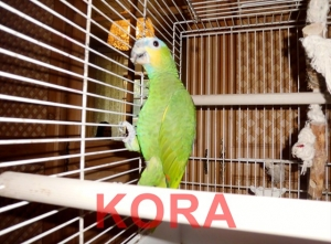 Kora-1