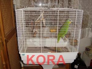 Kora-in-ihrem-Zuhause
